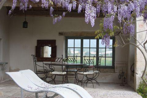 Wysteria terrace 3