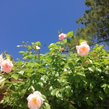 swimming pool hut roses