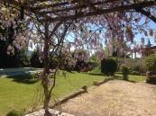 wisteria terrace