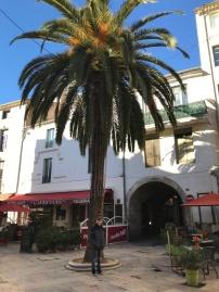 Palm Tree Nimes