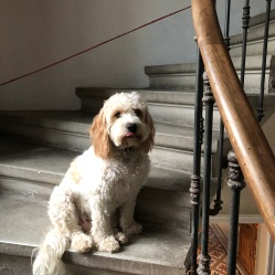 Ringo on the stairs